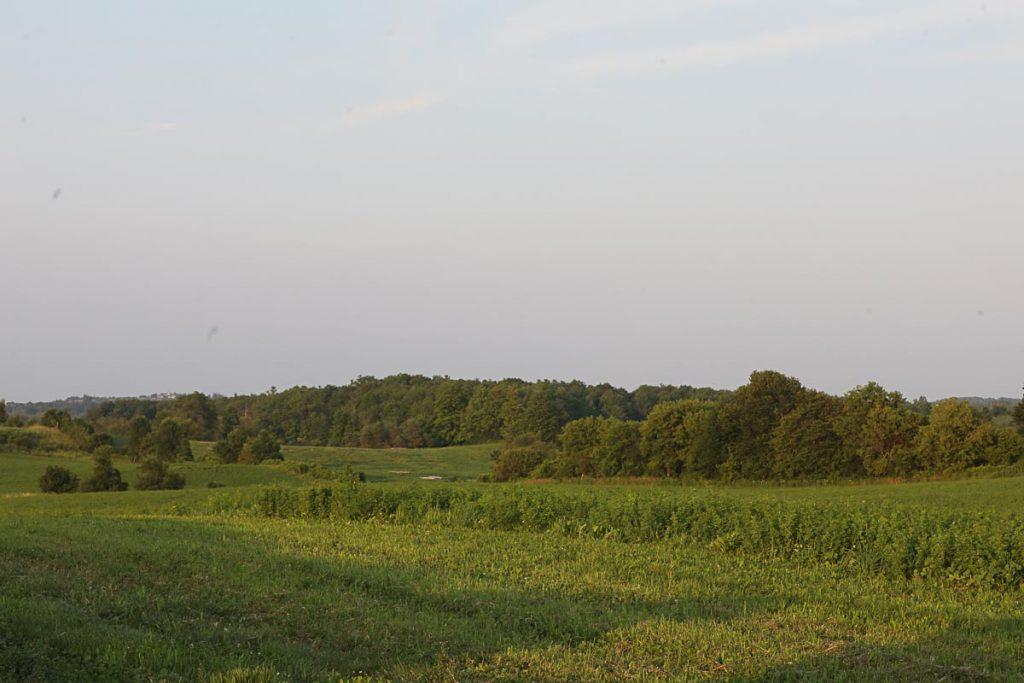 farmland, alfalfa, pasture